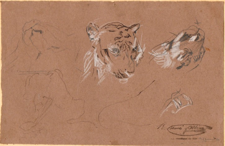 Sketchs of tyger heads