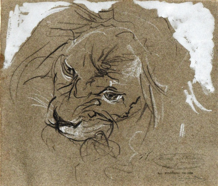 Sketch of lion's head