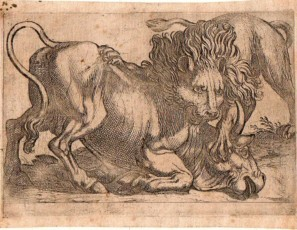 Lion attacking a bull