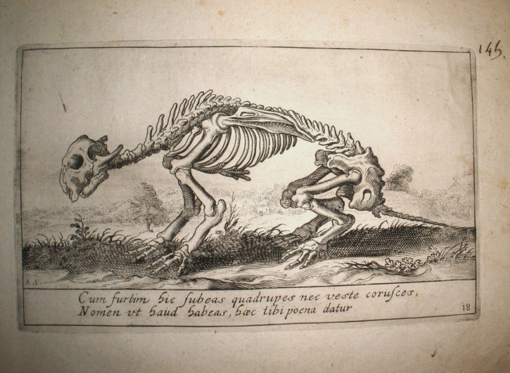 Animal skeleton