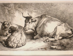 Cow and sheeps