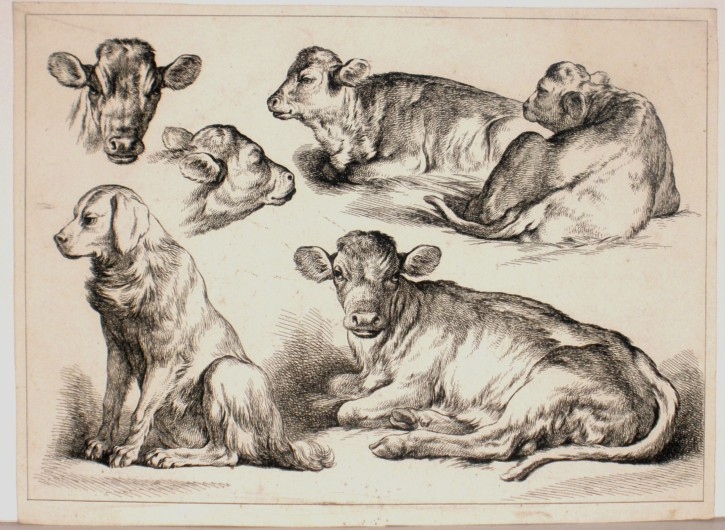Cows and dog