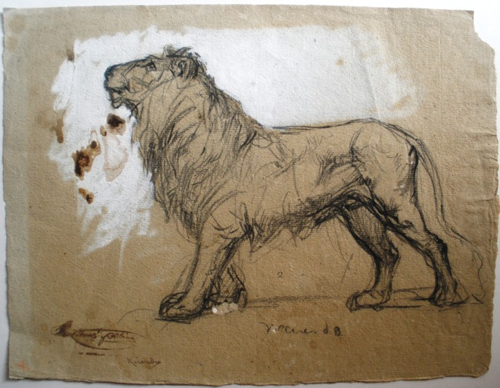 Lion (Martí Alsina, Ramón) - Circa 1862 - [Animals, Catalonia, XIX, Charcoal and clarion, Laid paper]