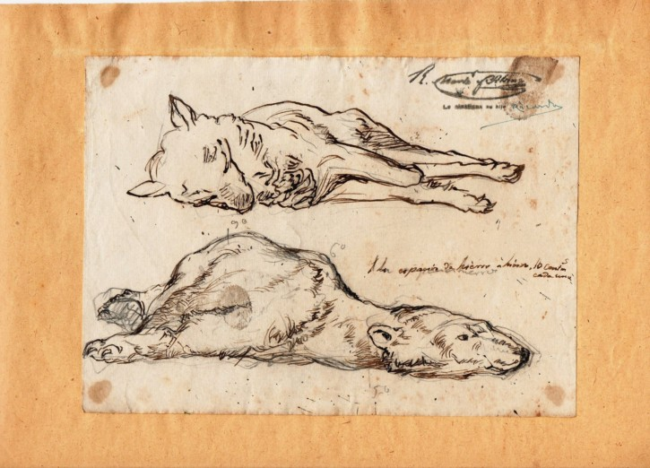 Sketch of a bear and a wolf laying