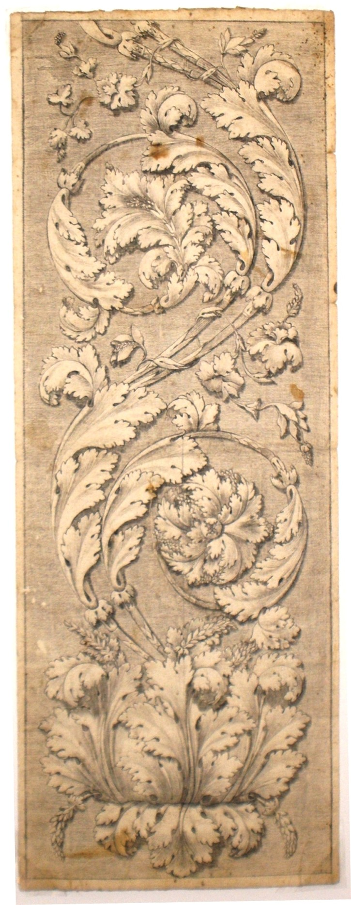 Acanthus leaves (Anónimo) -  - [Botany and Natural History, Spain, XVIII, Pencil and ink, Laid paper]