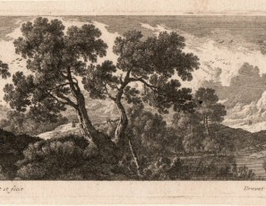 Landscape of a forest