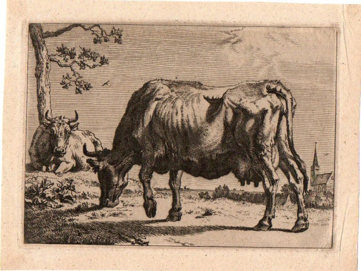 Cows and bulls (Potter, Paulus) - 1650 - [Animals, Holland, XVII, Etching and burin, Laid paper]