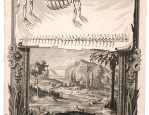 Cocodrilo – Leviatan