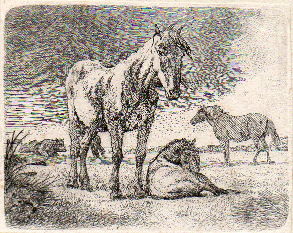 Horses and cows (Anónimo) -  - [Animals, Not known, XVIII, Etching and burin, Laid paper]