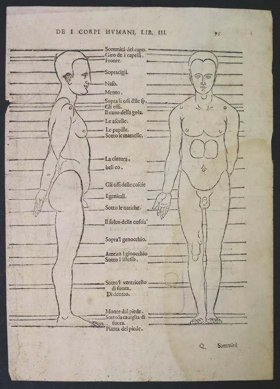 De I corpori humani. Dürer, Albrecht. 1591? (1528). Precio: 350€